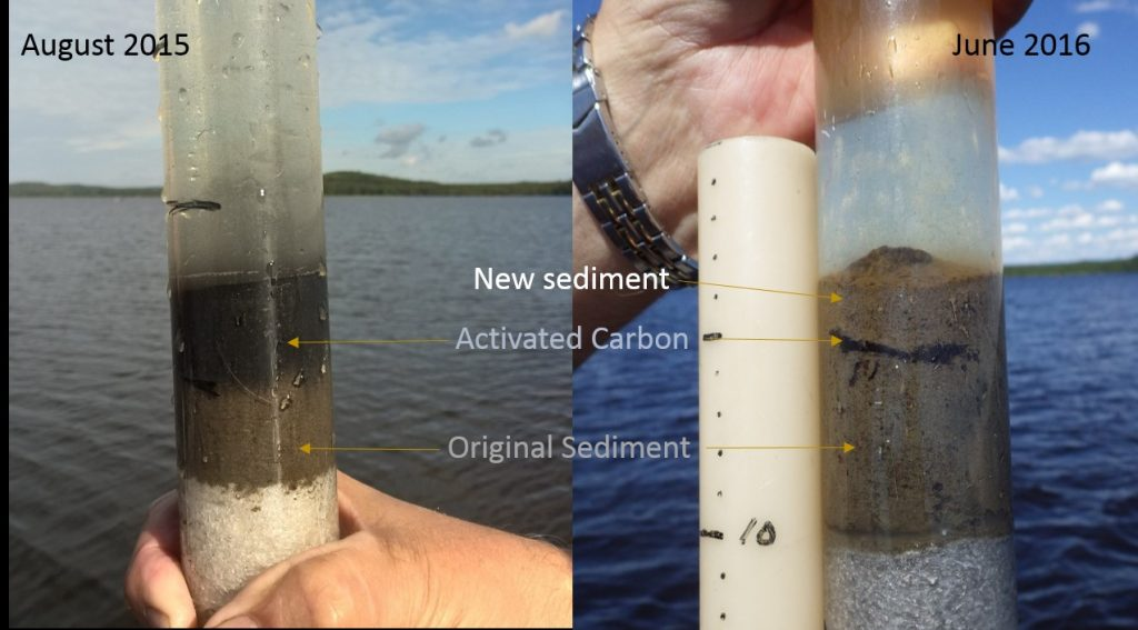 Sediment core samples showing the applied layer of activated carbon one day after the plot setup and 10 months later.