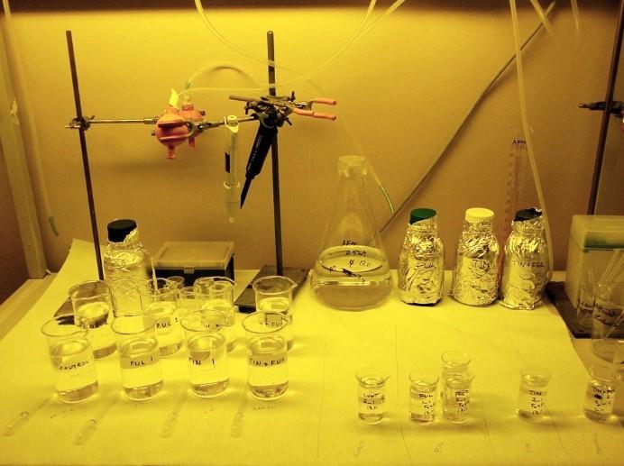 Vesikirppuja käytetään kemikaalien toksisuuden arvioinnissa, tässä tutkitaan vaikutuksia lisääntymiseen.