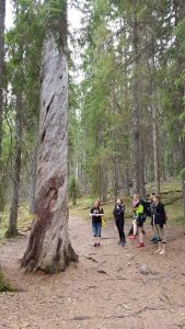 People standing next to a 500-year-old tree.