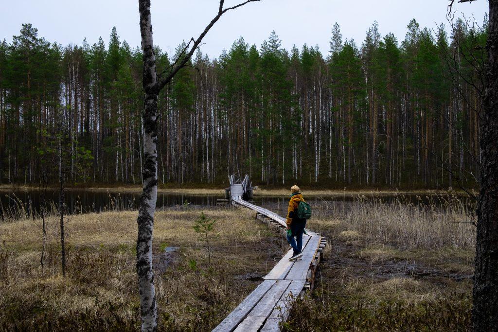 Ihminen pitkospuilla keskellä syksyistä metsämaisemaa.