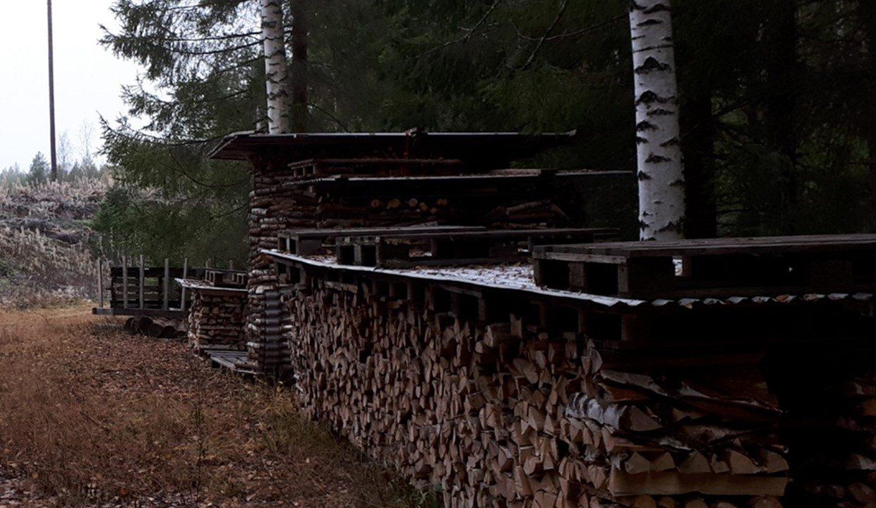 Huolellisesti suojattuja, suoria halkopinoja metsässä