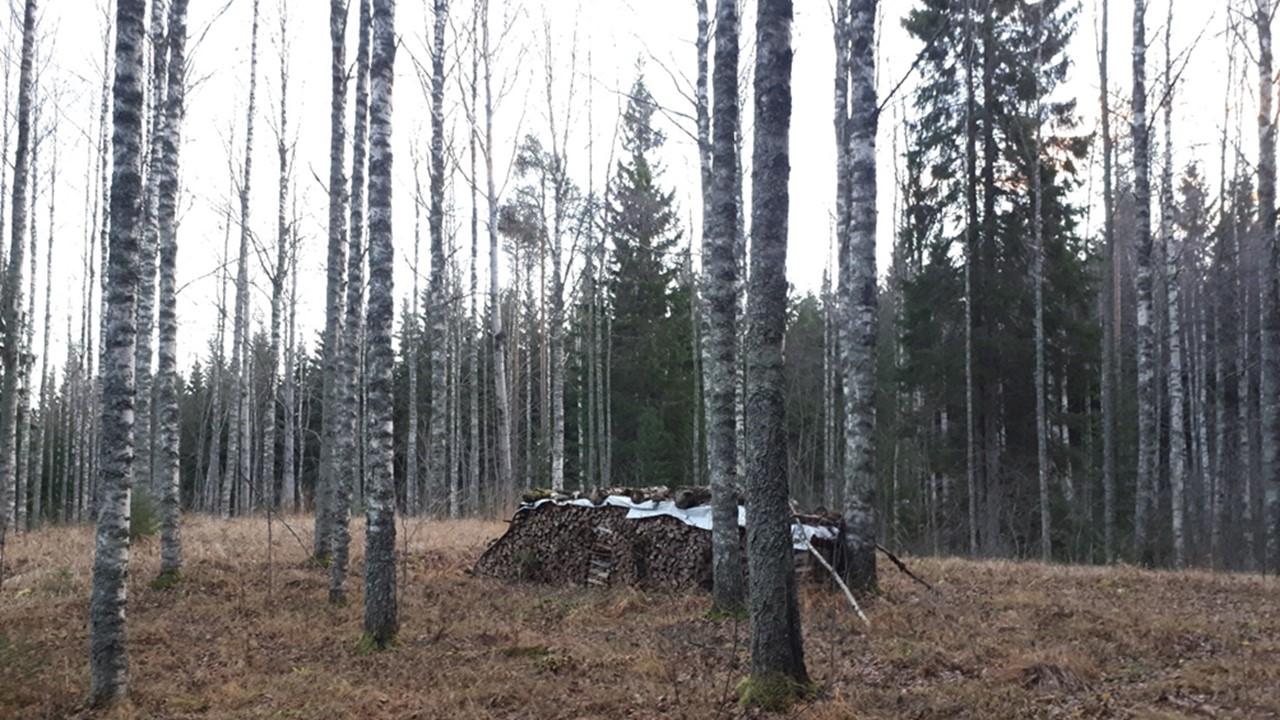 vähemmän suorareunainen halkopino metsässä