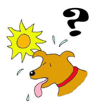 Koira hikoilee kysymysten kanssa.