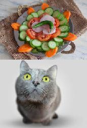 Kasvislautanen kissalle.