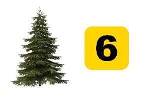 Kuusipuu ja numero kuusi.