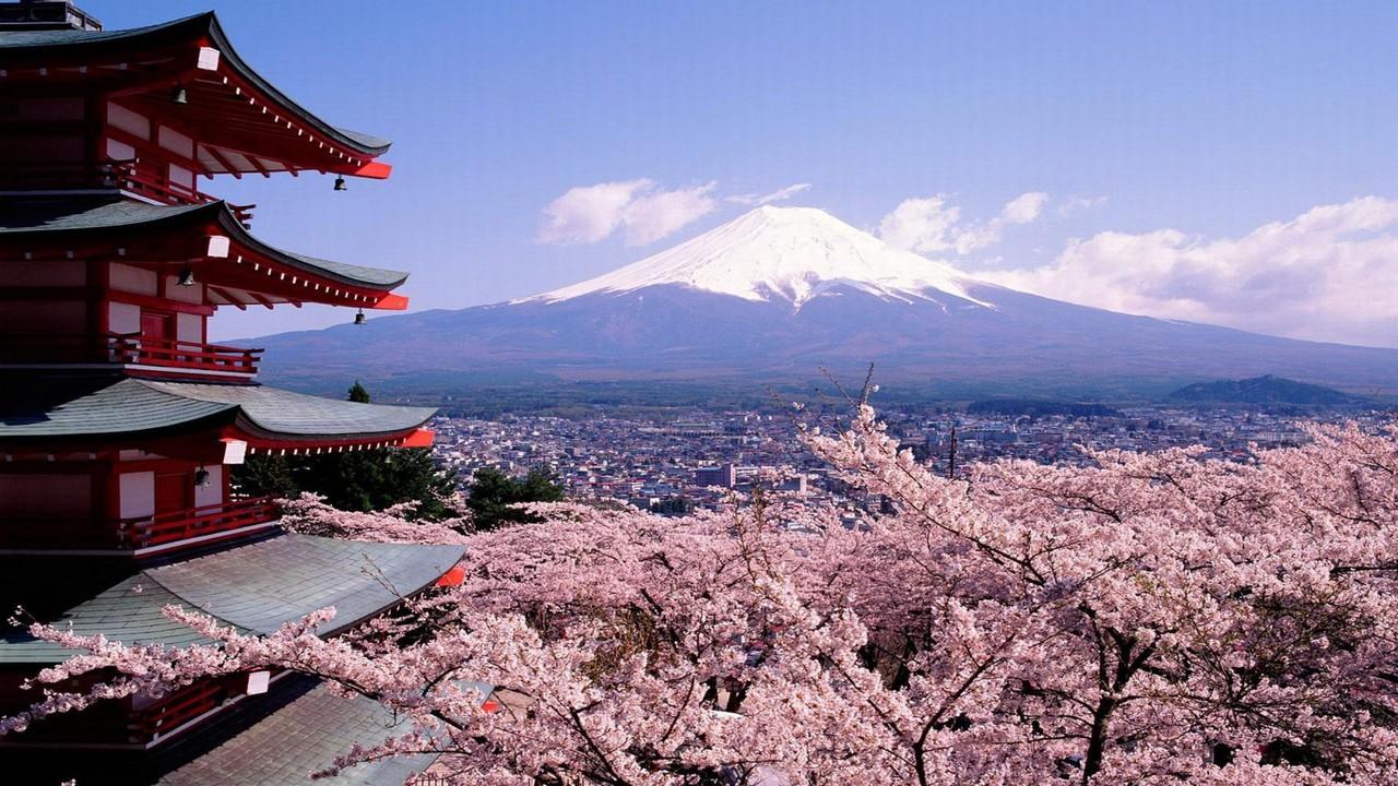 Kukkivat kirsikkapuut, temppeli ja Mount Fuji