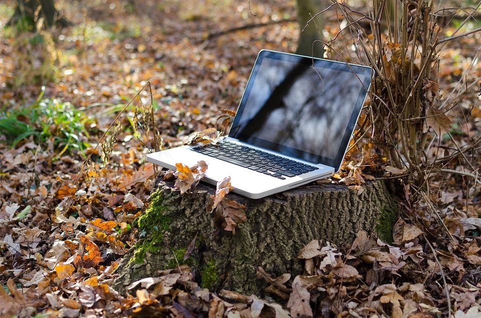 Syksyinen metsä. Kannettava tietokone kannon päällä. | Forest in autumn. Laptop on a tree stump.