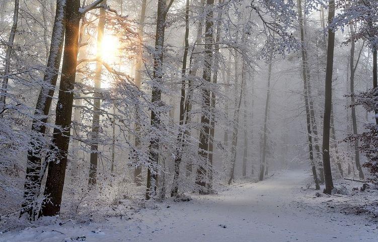 Talvi, aurinko kajastaa puiden lomasta. Lumiset puut ja luminen tie. Winter, sun shines behind snowy trees, small snowy road.